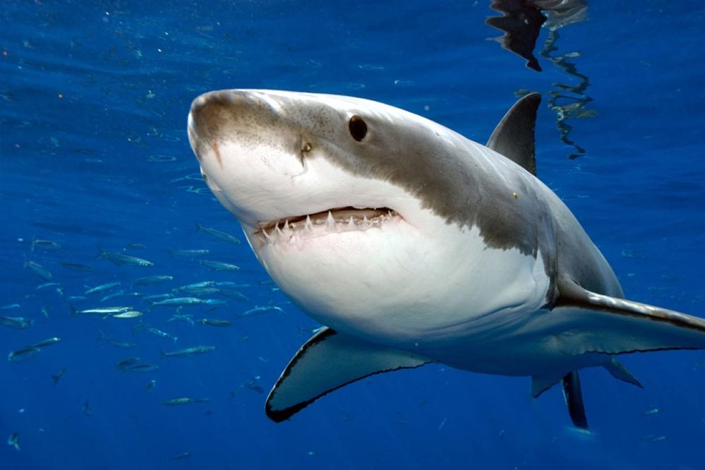 Les requins en Floride