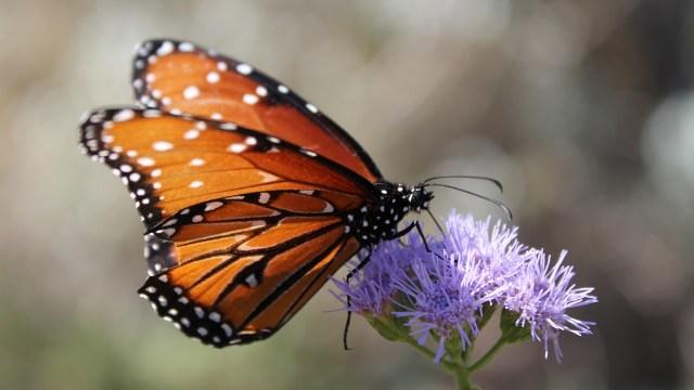 Cette image a un attribut alt vide; le nom du fichier est papillon.jpg